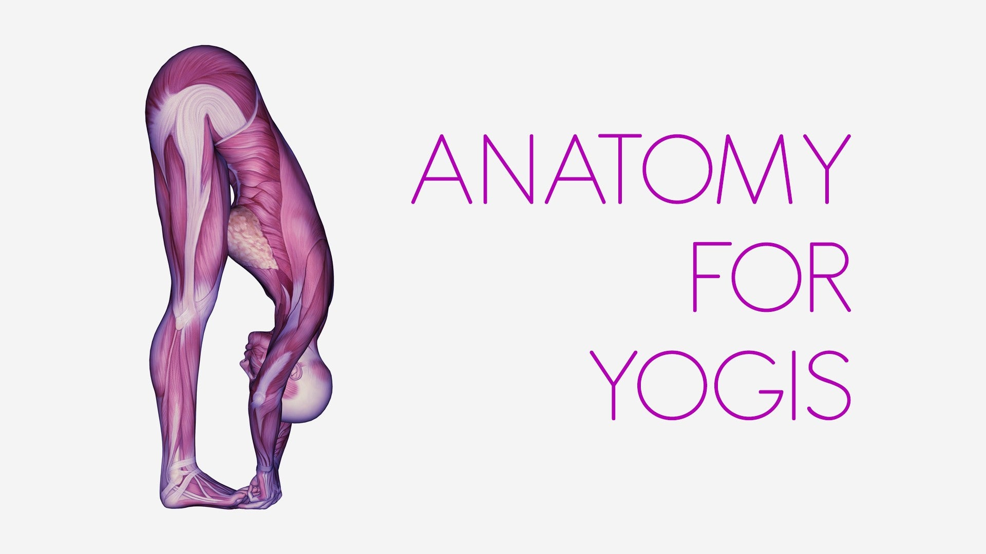 Anatomy for Yogis Artwork